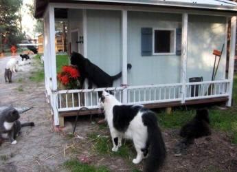 Kawasan Perumahan Untuk Kucing Di Florida