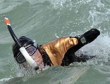 Tanpa Tangan dan Kaki Berenang 33 KM
