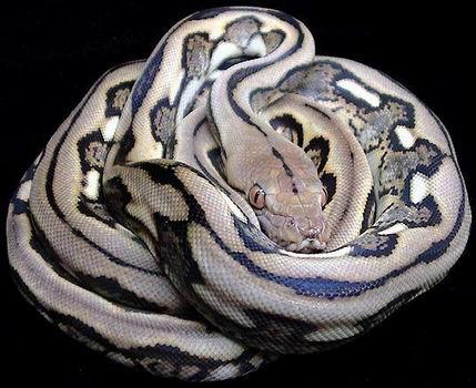 Python Reticulates
