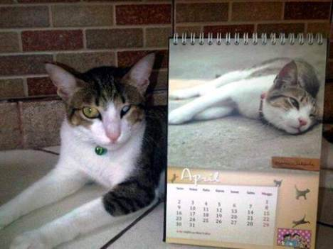 Kalendar 2012 nan Unik, 'Lebih Dekat Dengan Kucing Indonesia'