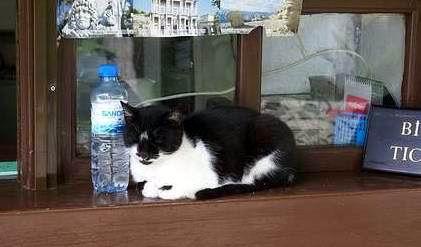 Kucing di Loket
