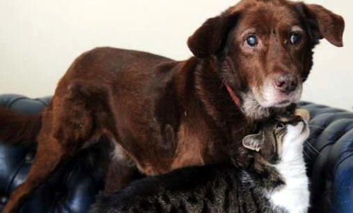 Terfel si anjing buta dan penuntunnya, Pwditat si kucing