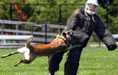 Anjing-herder