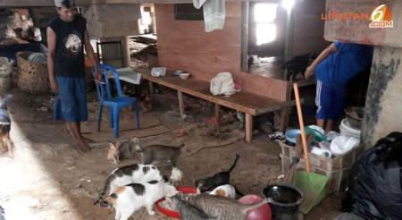 agar-60-kucing-bisa-makan-pemulung-ini-rela-kelaparan