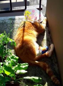 Chester Cheeto Kucing10